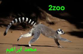 عائلات الليمور 769672678