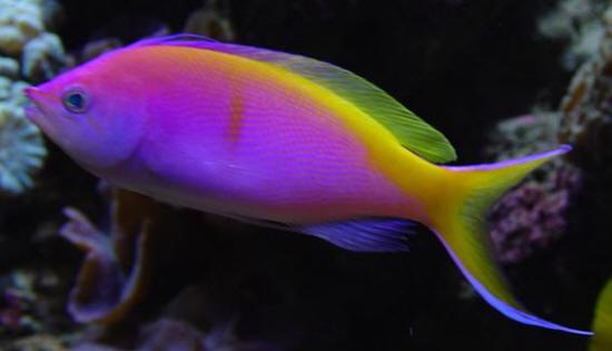 تجمع اجمل الاسماك بالعالم