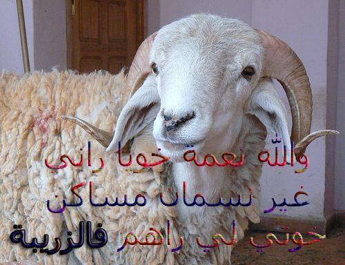 اخر خبر عاااااااااااااااااااجل حصري والله لي يفوتو هو الخاصر 927226343.jpg