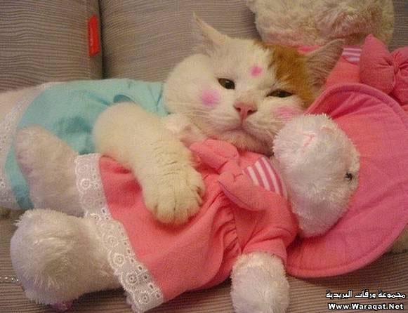 عالم القطط الغريب طرائف ومغامرات