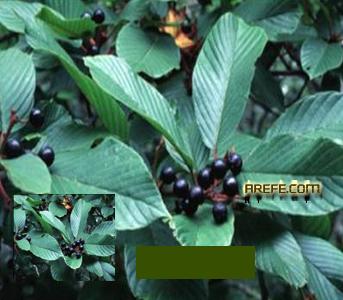 8deb06633 الاعشاب [الأرشيف] - المنتدى الرسمي لفضيلة الشيخ الدكتور محمد بن عبدالرحمن  العريفي