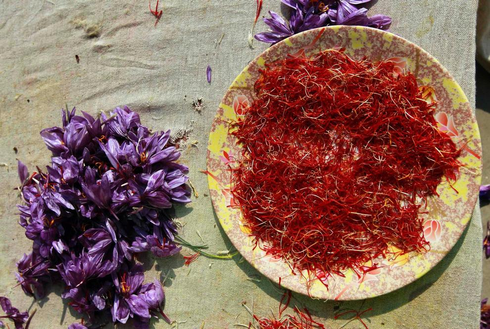 Saffron - one of the most expensive spice in the world (13 photos)
