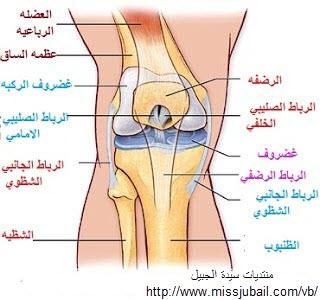 خشونة الركبة والاغذيه المفيدة ووسائل