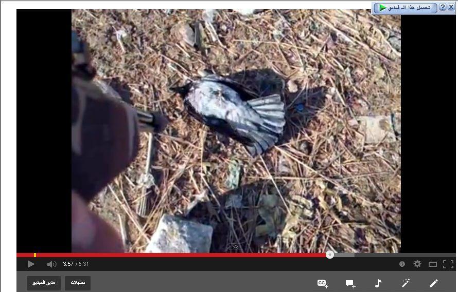 وتتوالى قنابل القبطان (فيديو
