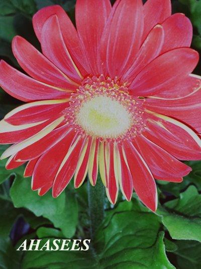 جمال الزهور 640399669.jpg