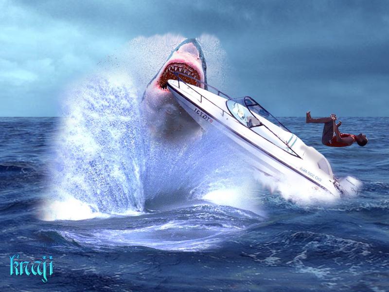 سمك القرش وغدر البحر