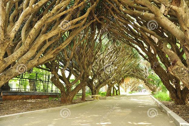 من اجمل حدائق العالم .. 378510186.png