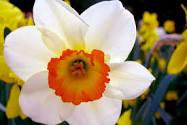 انواع الورد و صور ورد لكل نوع من الانواع مهداه الى عشاق الورود 470746385.jpg