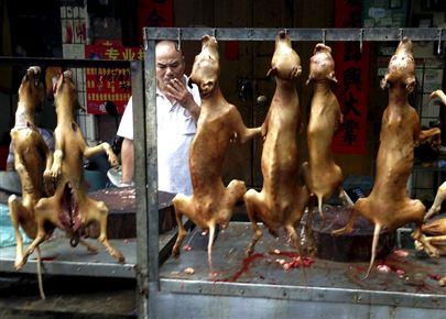 انطلاق مهرجان أكل لحوم الكلاب في الصين