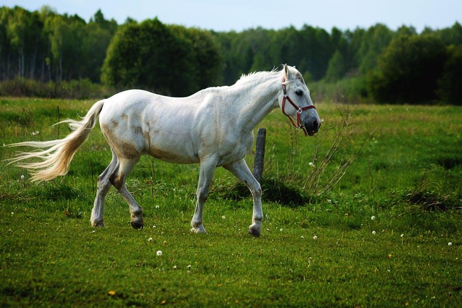غاية الجمال والابداع لعشاق الخيول 722412764.jpeg